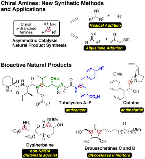 New Synthetic Methods and Applications