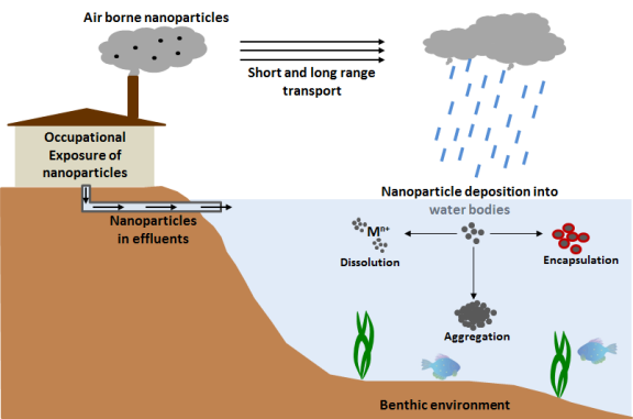 nanoscience the surface effects of nanoparticles essay Journal of nanoscience and  characterization and cytotoxic effect of silver nanoparticles by  effect of surface-modified carbon nanotubes on intrinsic.