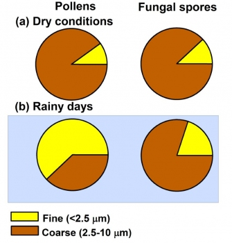 Influence of rain on the abundance and size distribution of pollens and fungal spores in the atmosphere